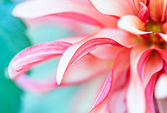 Flower with Shallow Depth
