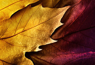Shop Close Up Of Colorful Leaf Wallpaper In Flowers Leaves Theme
