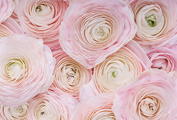Delicate Pink Flowers Wallpaper For Bedroom Wall Decor
