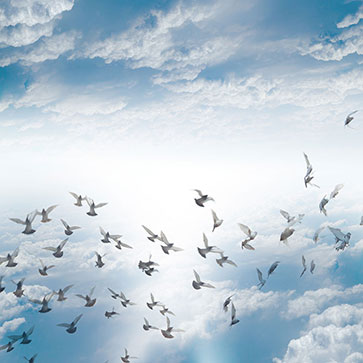 Birds Flying in Sky
