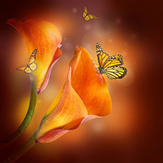 Lilies And The Butterfly