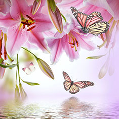 Multi Colored Lilies And Butterfly