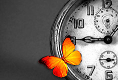 Butterfly on Clock