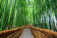 Path To Bamboo Forest