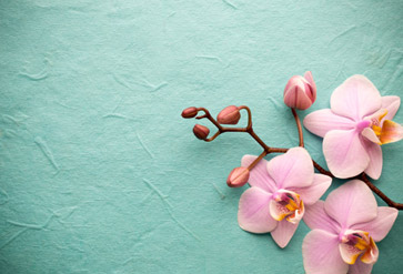 Pink Orchid On A Background Wallpaper For Living Room Wall Decor