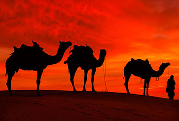 Shop Rajasthan Desert With Camel Wallpaper In India Theme