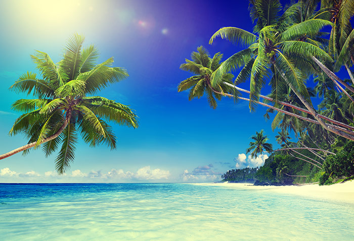 Shop Tropical Paradise Beach Wallpaper In Coastal